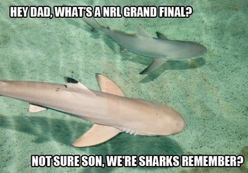 sharks-med